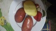 Картофель Розара вкусный разваристый клубни большие и по меньше продам